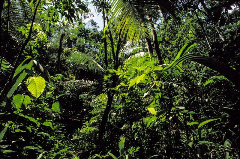 Ponta da Juatinga, Parati-RJ,  Área de Proteção Ambiental do Cairuçu e e Reserva Ecológica da Joatinga. (C)José Caldas