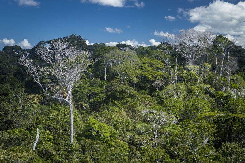 Parque Nacional do Descobrimento BA 1 - Rafael Duarte